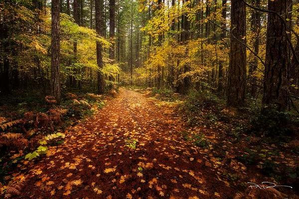 Washington, Gifford Pinchot National Forrest