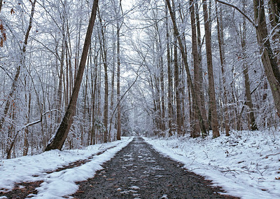 Snowy path through the forest