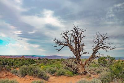 A single tree in the desert landscape