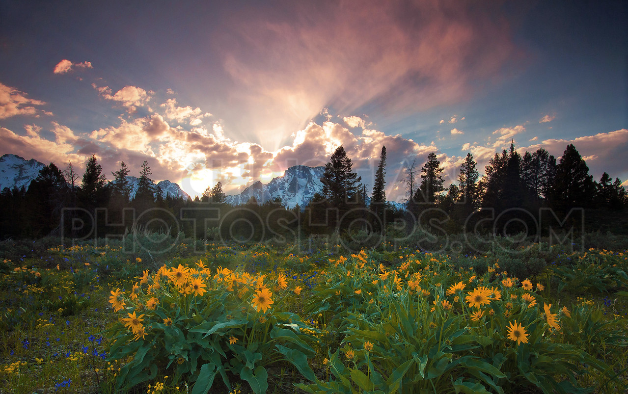 Wildflowers and sunset