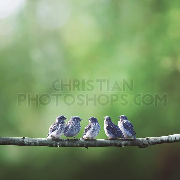 Baby blue birds in a tree