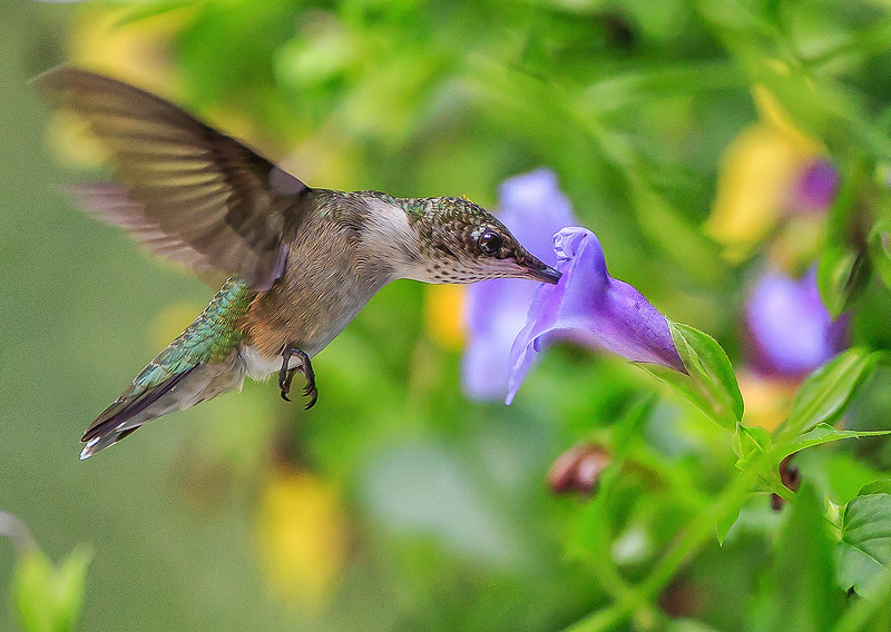 Tasty Torenia Nectar