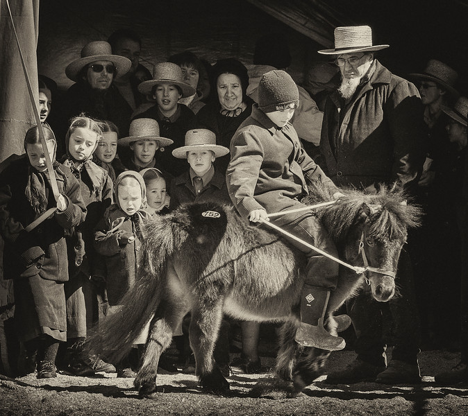 The Pony Auction