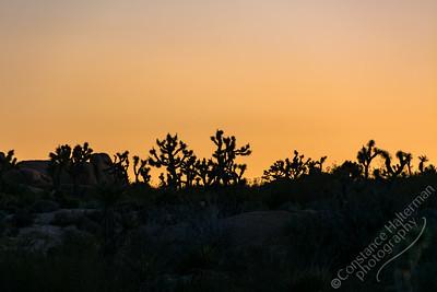 Joshua Tree National Park - sunset