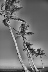 Palms along the Pacific