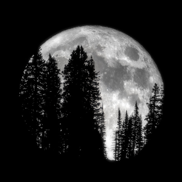 Moonrising behind Trees