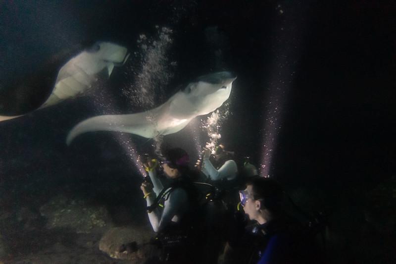 Manta Ray Dive 4