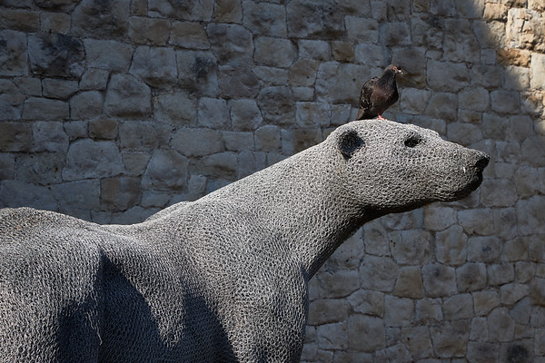 Bear sculpture with pigeon in the Tower of London