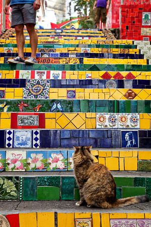A cat watches tourists come and go on the Selaron Steps in Rio