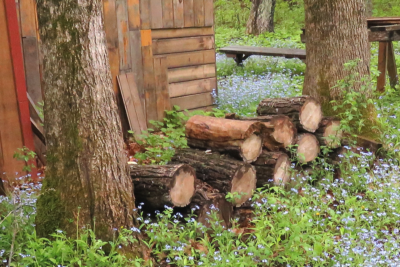 Wood Pile and Flowers