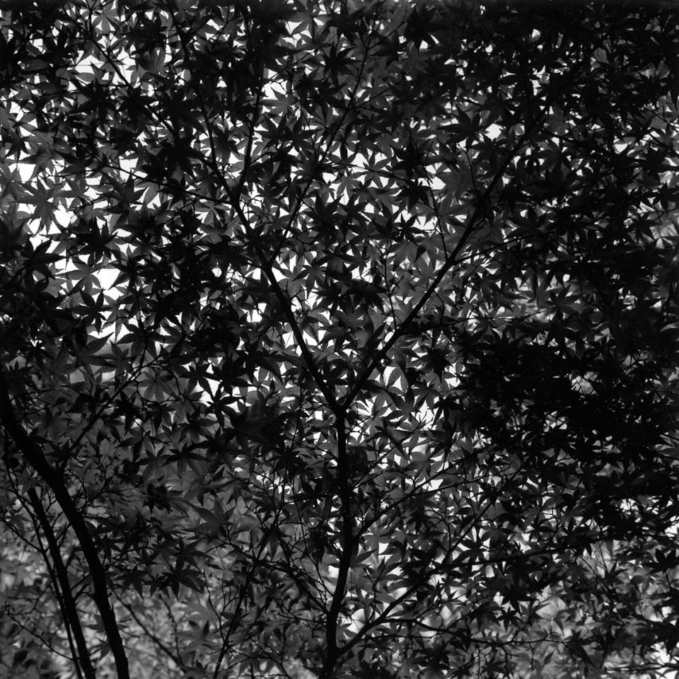 le jardin des mousses à Kyoto (Japon)