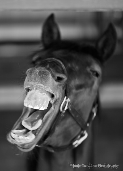 Best in Category<br /> Monochrome<br /> Orlando Camera Club<br /> 2010<br /> Title: AUGHHHH!