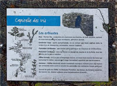 Circuit des Capitelles  - Les Iris