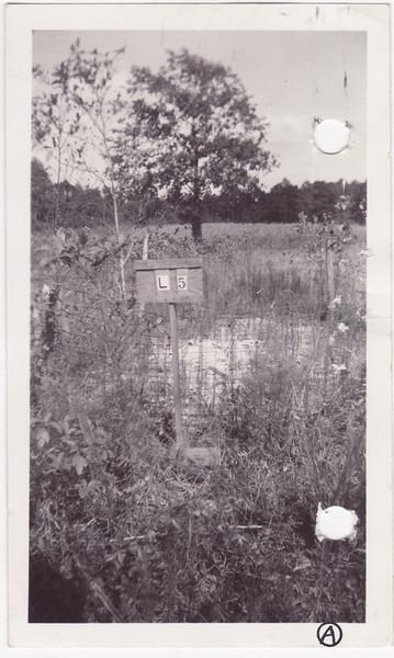 L 5 DR Evans baby grave photo