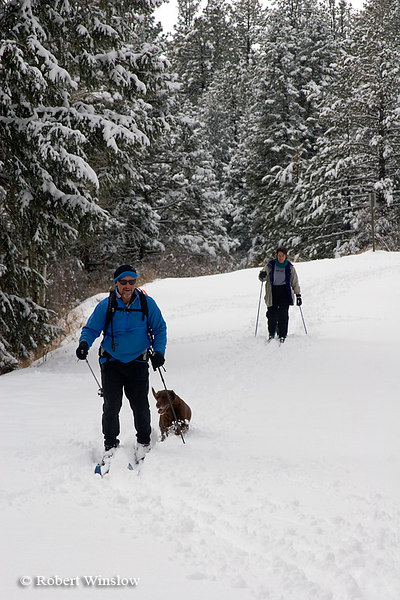 Model Released, Cross Country Skiers with Dogs, East Fork of San Juan River Road, San Juan National Forest, Near Pagosa Springs, Colorado