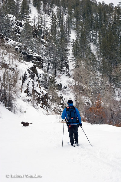 Model Released, Cross Country Skier with Dog, East Fork of San Juan River Road, San Juan National Forest, Near Pagosa Springs, Colorado