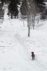 Minature Schnauzer named Duffy on Cross-country Ski Trail, La Plata County, Colorado, USA, North America