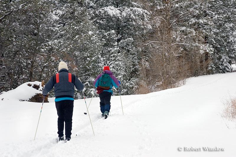 Model Released, Cross Country Skiers, East Fork of San Juan River Road, San Juan National Forest, Near Pagosa Springs, Colorado