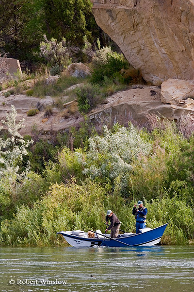 "NoMR,Guide Mark Clark of Rise ""N"" Fly Guide Service with Client Charles Vestal of Louisiana and Ruger the Dog, Fishing, San Juan River below Navajo Reservoir Dam, New Mexico"