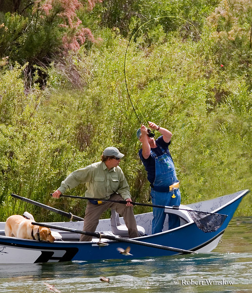 """NoMR,Guide Mark Clark of Rise """"N"""" Fly Guide Service with Client Charles Vestal of Louisiana and Ruger the Dog, Fishing, San Juan River below Navajo Reservoir Dam, New Mexico"""