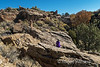 Cannonball Mesa 0523W1C