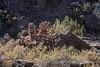 Cannonball Mesa 0515W1C