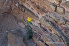 Flower in the Ruins 0262W1C