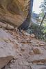 Petroglyph Trail 0215W1C