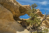 Double Arch (Map #14) NM 545