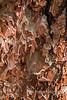 Ponderosa Pine Bark Detail 0201W1C