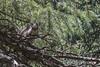Squirrel West Lime Creek Trail 0107W1C