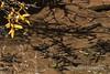 Lime Creek Detail 0272W1C