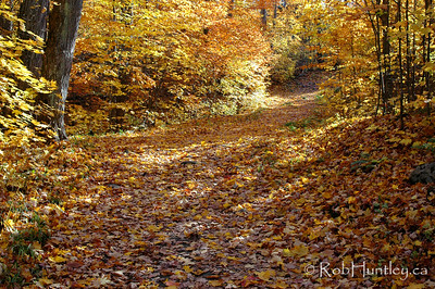 Fall colours on a hiking trail in Gatineau Park. © Rob Huntley