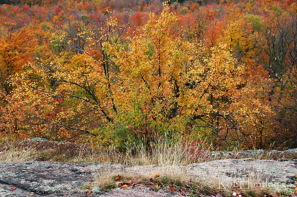 Fall colours along a hiking trail in Gatineau Park.