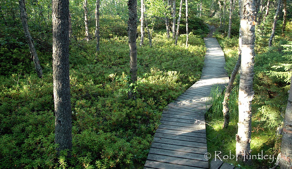 Boardwalk through the forest.