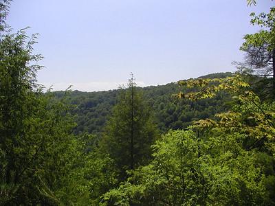 Lush green trees to the right of Honey Creek Overlook.