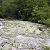 Reindeer moss grows atop this bluff<br /> Honey Creek Loop Hike<br /> Big South Fork Recreation Area<br /> Scott County, TN