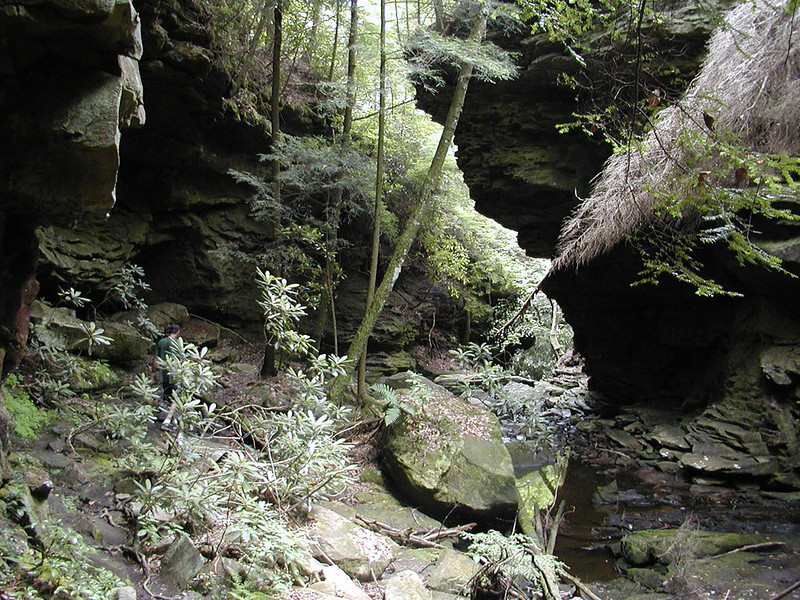 Last picture of the green and beautiful Honey Creek Loop Hike. I was getting tired!<br /> Honey Creek Loop Hike<br /> Big South Fork Recreation Area<br /> Scott County, T