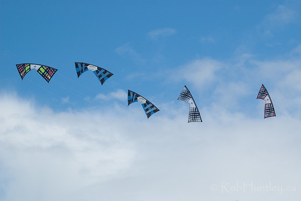 Acrobatic rev kites at the 2011 Windscape Kite Festival