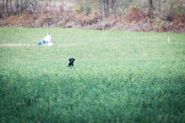 Retriever Training at John Valkovec Farm (November 2015)