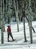Probable Model Release, Woman Snowshoeing, Aspen Trees, La Plata County, Colorado, USA, North America