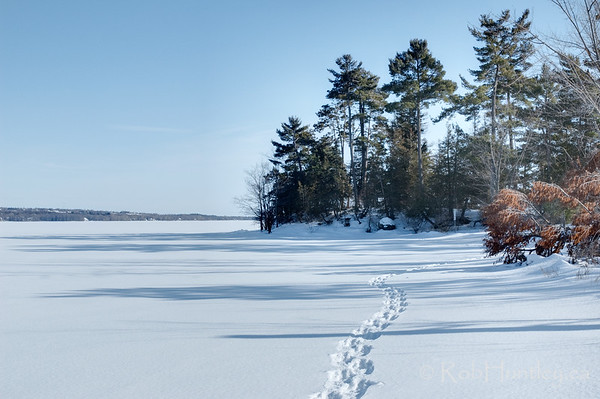 Snowshoe tracks on the river.