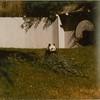 Panda (01024)
