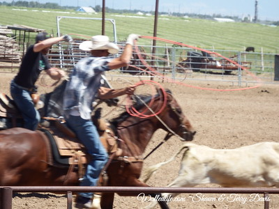 Ropping Cattle in Colordo