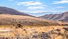 Death Valley National Park - D1-C3-0036 - 72 ppi-2
