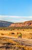 Vermilion Cliffs National Monument - C1-0056 - 72 ppi