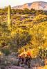 Saguaro National Park - C1-0186 - 72 ppi