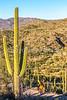 Saguaro National Park - C2-0077 - 72 ppi