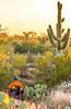 Saguaro National Park - C1-0347 - 72 ppi-2