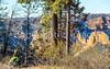 North Rim of Grand Canyon National Park - C1-0024 - 72 ppi